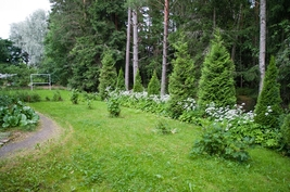 Takapiha rajoittuu metsään