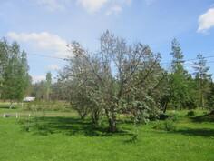 Komealla n. 1 ha:n tontilla kasvihuoneen lisäksi mm. satoisia tyrnipuita!