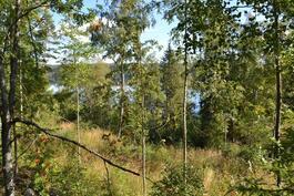 Näkymä päärakennuksen takaa järvelle