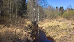 Kirkasvetinen puro alapihalla tontin rajalla