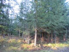 Lisäkuvaa tilan metsäpalstasta, jossa on myös harvennushakkuutarvetta!