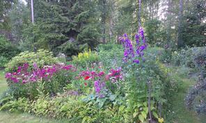 Kesän kukkaloistoa parahimmillaan perennapenkissä
