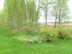 piha-aluetta, Kortejärvi siintää taustalla