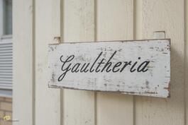 Gaultheria, eli ...? Oikein, ruukkukasvi. :)