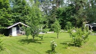 Monipuolisella n. 4600 m2 omalla tontilla mm. ruusujen ja hyötykasvien lisäksi metsikköä!
