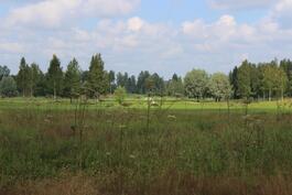 golfkenttä takana, näkymä omasta pihasta