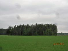 Tontilla on kova mänty-sekametsä, yhteensä noin 1 ha metsäinen tontti