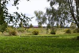 Puutarhassa marjapensaita ja tilaa kasvimaalle