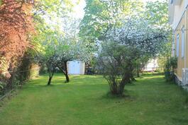 Puutarhassa omenapuita ja marjapensaita