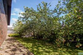 Talon vierustalla kaksi tuottoisaa omenapuuta.