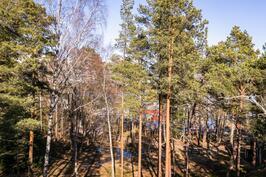 Näkymä asunnosta F8, noin 2. krs, tontin puut kaadetaan