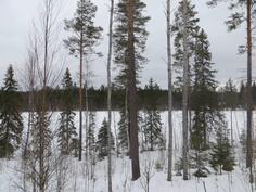 siemenpuualuetta
