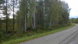 Lähinnä Suokonlahtea oleva Viitarannantien eteläpuolella oleva kulma, kuvio 9