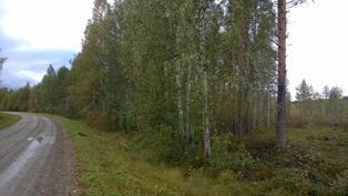 Puusto, joka rajoittuu Viitarannantiellä idän puoleiseen rajaan. Kuvio 2