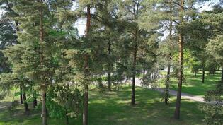Metsäinen puistonäkymä.