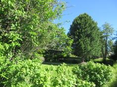 Ja tässä upeaa kesän vihreyttä talon etupihalta!