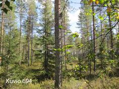 Kuhmo Metsä-Kolmio kuvio 691