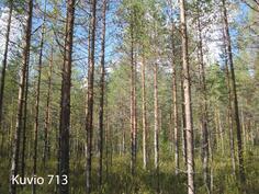Kuhmo Metsä-Kolmio kuvio 713