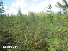 Kuhmo Metsä-Kolmi kuvio 715