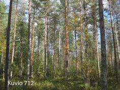 Kuhmo Metsä-Kolmio kuvio 712