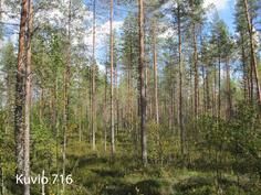 Kuhmo Metsä-Kolmio kuvio 716