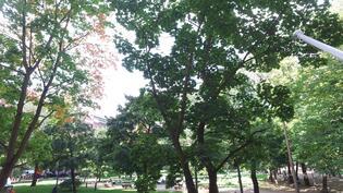 Esteetön näkymä Vanhan kirkkopuistoon