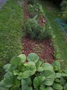 Uusi kukkapenkki takapihalla