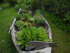 Pihan koristeena on kukkiva vene