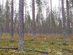 Kuviolta 716 varttunutta metsää