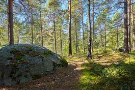 Metsäiset polut odottavat ulkoilijaa