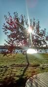 Syksyinen maisema järvelle päin