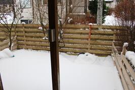 Talvinen takapiha