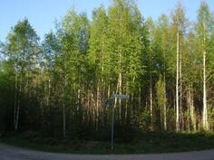 Mantereella sijaitseva metsäalue