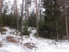 Takapihalta rauhallista metsää / Rauhallinen ulkoilualue