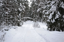 mökkitie talvella, aurausapua saa tarvittaessa, voi käyttää myös suksia. Auratulta tietä matkaa 1km