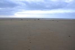 Matalalla vedellä hiekkarantaa riittää, jäljet metsäkauriin