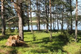 kangas metsää
