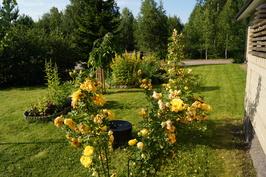 Ruusujen vierellä salaojituksen tarkastuskaivo.