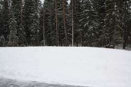 Takapiha rajoittuu suojaisasti metsään