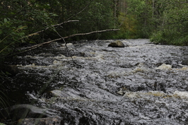 Hoikanjoki runsasvetisenä aikana.