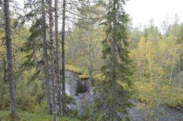 Näkymä tontilta. Alhaalla Hoikanjoki.