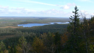 Näkymä läheiseltä Näränganvaaralta. Järven nimi on Laattaja.