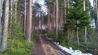 Tie metsätilalle