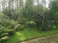 Omenapuita pihassa