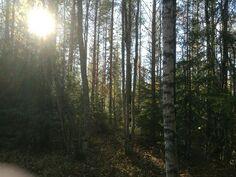 Kuva metsästä
