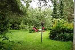 Tilava vehmas puutarha
