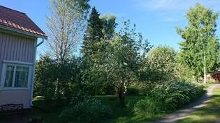 Etupihalla runsas puutarha