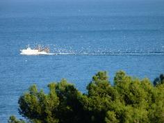 Kalastusalus saapuu rantaan. Kuvattu parvekkeelta..