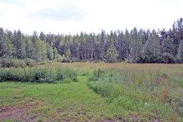 laidunta ja metsää
