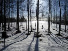 Lumi alkaa sulaa